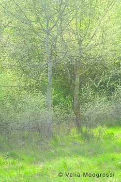 Among trees - XXXI