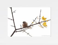 Autumn colours - II