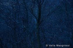 Among trees - XVI