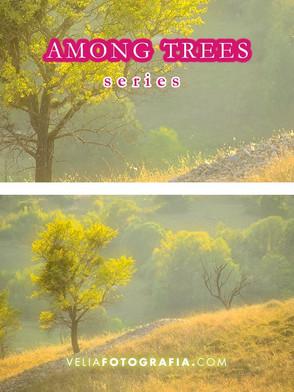 Among_trees_IV.jpg