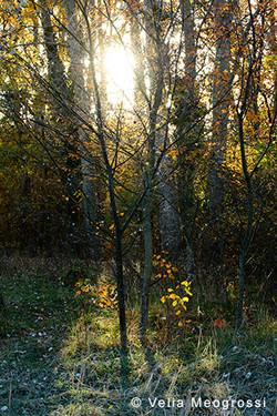 Sunny days of Autumn - II