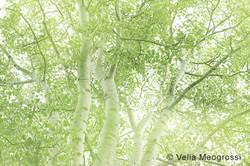 Spring branches - VI