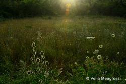 Summer fields - II