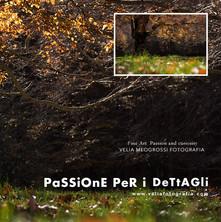 print_tree_autumn.jpg