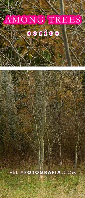 Among_trees_Autumn_days.jpg