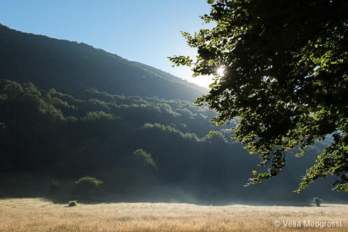 Seasons - IV - Summer at woods