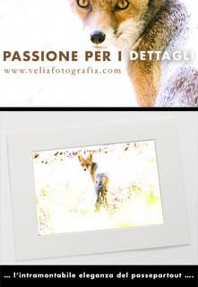 print_fox.jpg