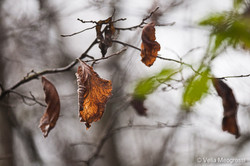 Autumn - The sound of colours - IV