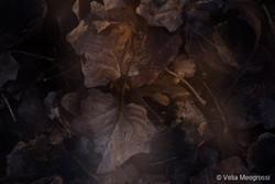 Autumn - The sound of colours - XXXV