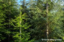 Among trees - XLII