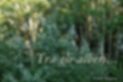 The_tree_of_Seasons_among_the_trees.jpg