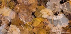 Autumn - The sound of colours - LIV