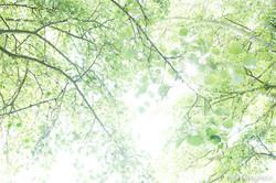 Spring - The sound of colours - XXXI