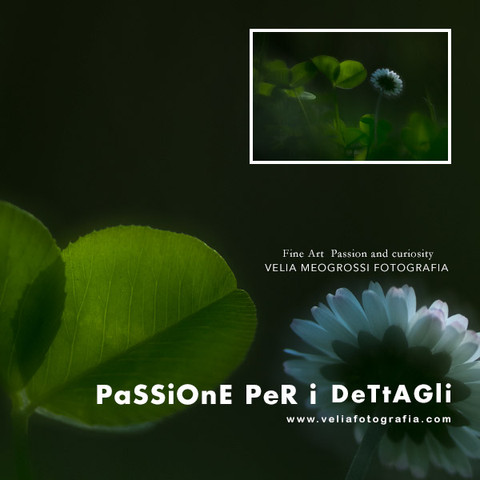 print_daisy_II.jpg