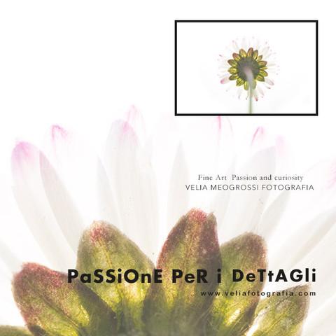 print_daisy_I.jpg
