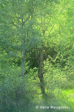 Among trees - XXXV