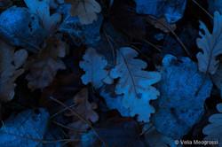 Autumn - The sound of colours -  XLVII