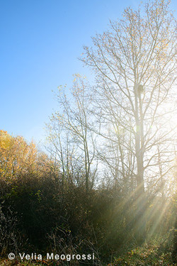 Among trees - VIII