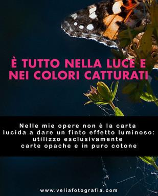 velia_fotografia_luce_colori.jpg