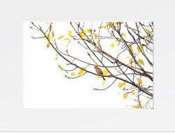 Erithacus rubecula (Autumn colours)