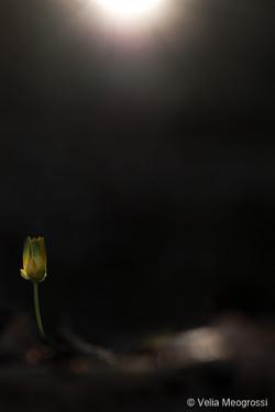 Yellow at sunset - II