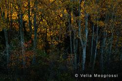 Among trees - VII
