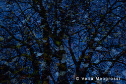 Autumn branches - VII