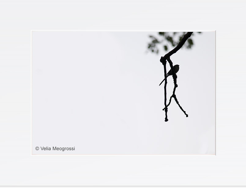 Long tailed - On the branches