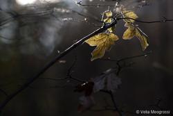 Autumn - The sound of colours - XXXII