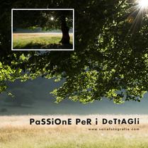 print_tree_summer_II.jpg