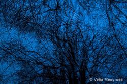 The beauty of night - III