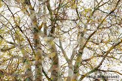 Autumn branches - V