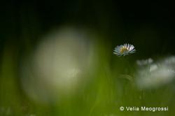 Spring fields - VI