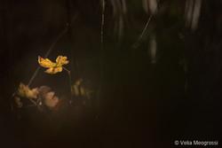 Autumn - The sound of colours - XL