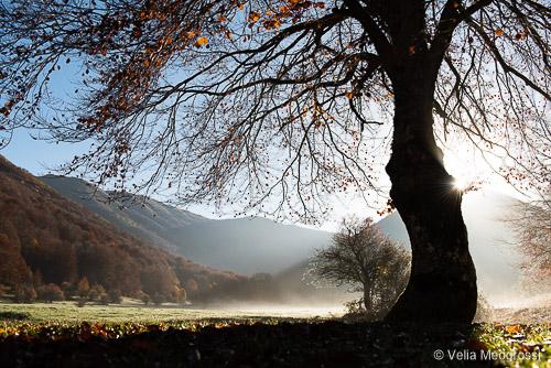 Seasons - IV - Autumn