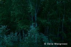 Among trees - XL