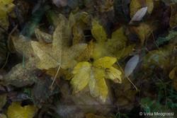 Autumn - The sound of colours - XXV