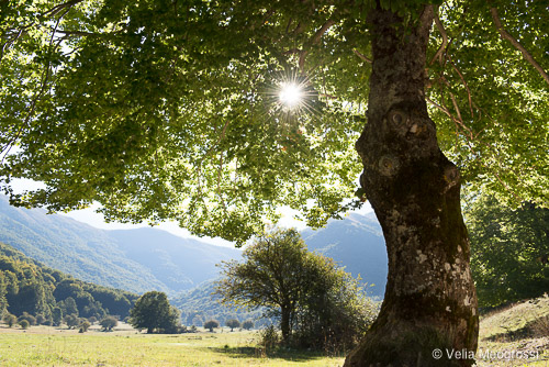 Seasons - IV - In the shadow