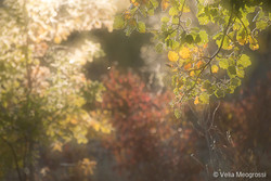 Autumn - The sound of colours - XXXVIII.