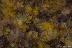 Autumn - The sound of colours - XXVIII