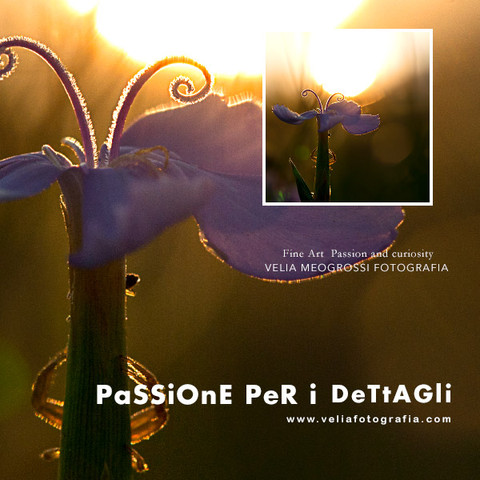 print_flowers_sun.jpg