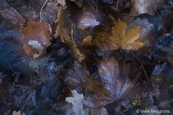 Autumn - The sound of colours - XXXIX