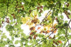 Autumn - the sound of colours - X