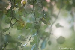 Autumn - The sound of colours - XXX