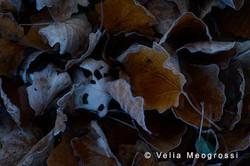 Autumn - The sound of colours - LXXIX