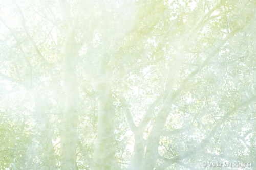 Summer branches - III (warm and sunn