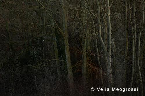 Among trees - XX