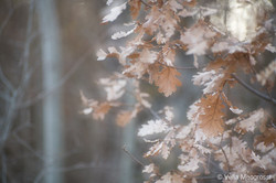 Winter - The sound of colours - VIII (do