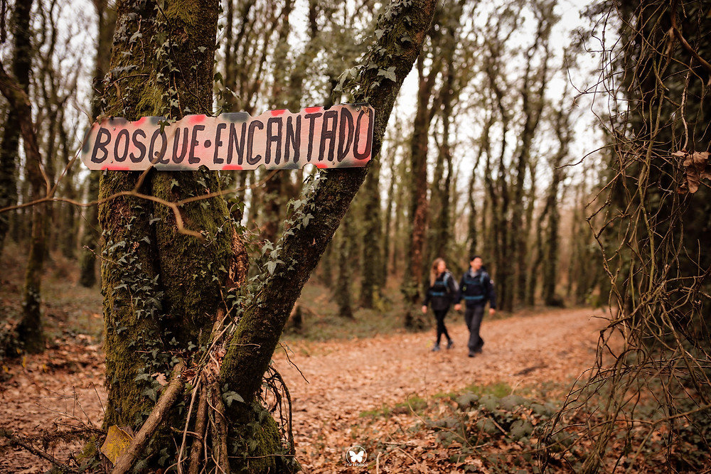 camino de santiago de compostela en galicia, bosque encantado