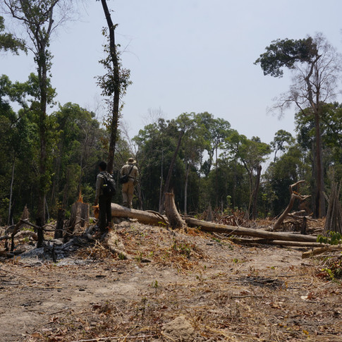 Tracking Illegally Logged Wood to a Factory Used by Top Fashion Brands in Cambodia